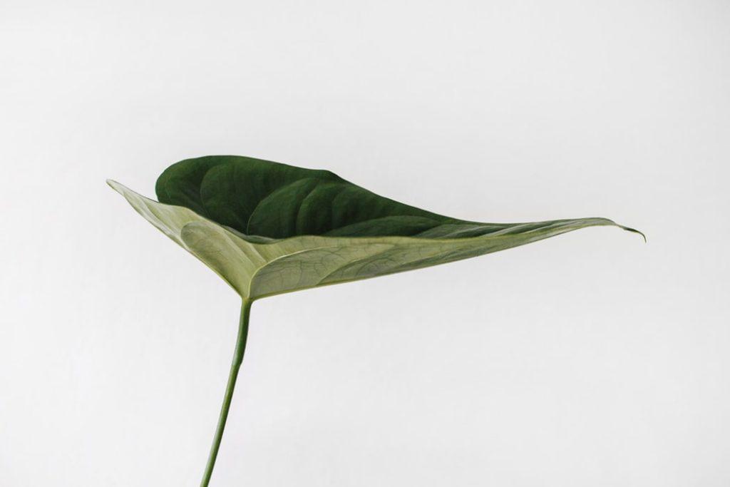 Concept Store Muensing Pflanze